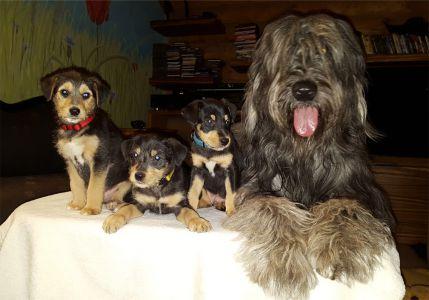 Czytaj więcej: Pieski do adopcji