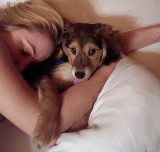 adopcja szczeniaka