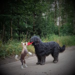 Hodowla psow Poznan Asperados 5