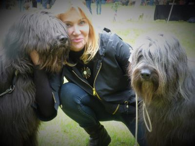 briard on show selection