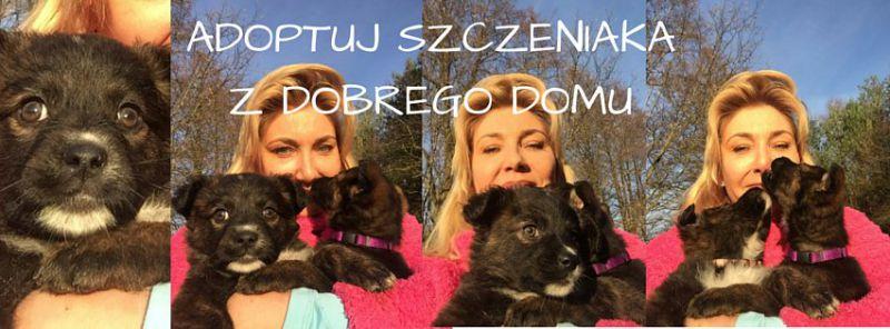 szczeniaki adopcja poznan