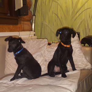 adopcja psow